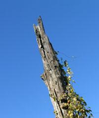 空に延びる木