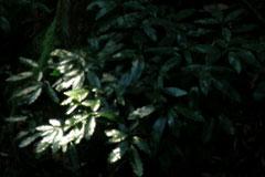 林の中のスポットライト