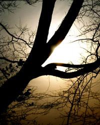 太陽の光と木の陰は月と日を表す