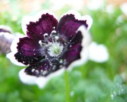 花・紫・白