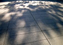無機質な床を覆う木々の影