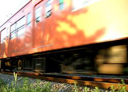 斜陽列車に映える木々の揺らぎ