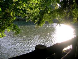 午後の日溜まり@井の頭公園