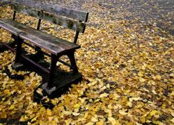 落ち葉の中で休一息