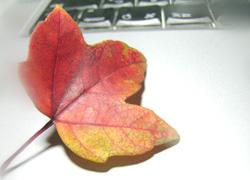 楓の葉とPB