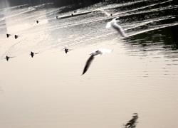 飛翔と遊泳