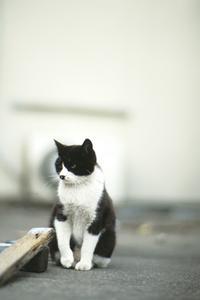 猫 width=
